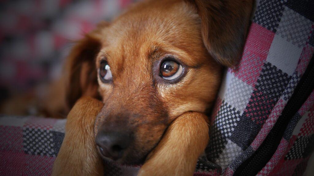 dog sensitive stomach
